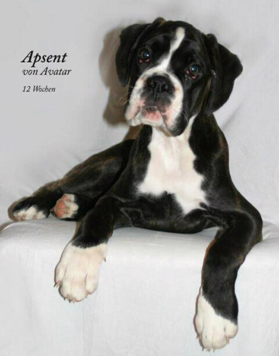 Apsent