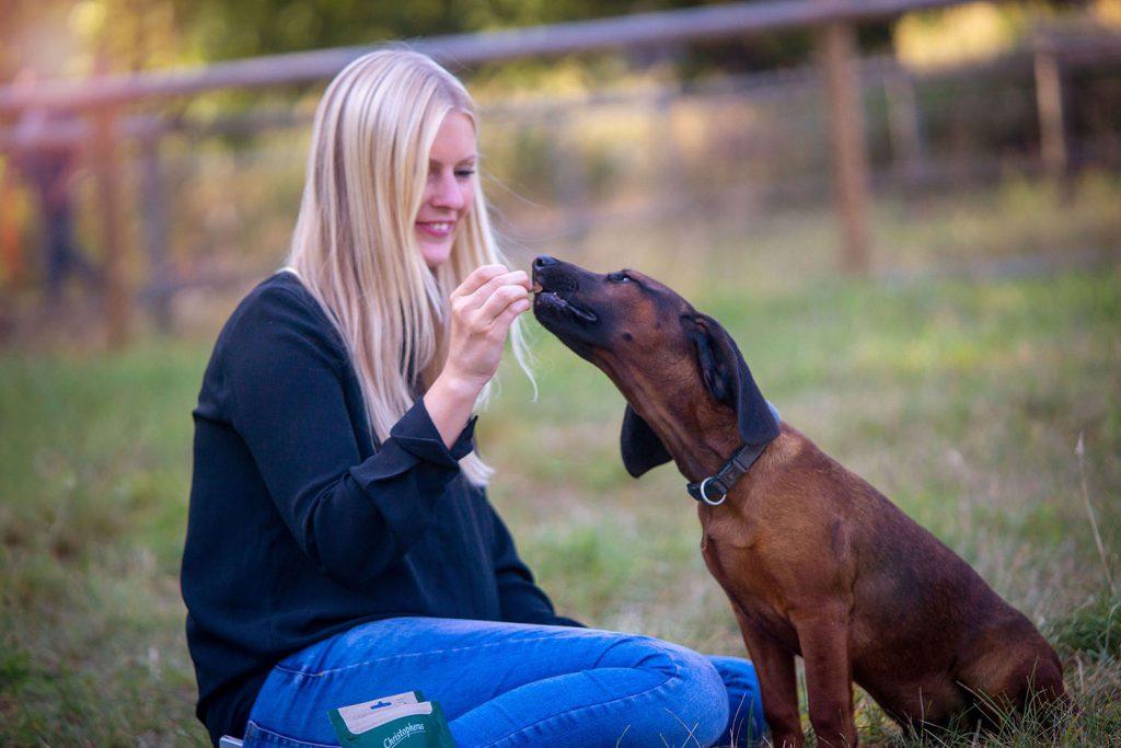 Hunde erhalten zur Belohnung ein Leckerli